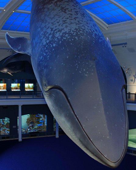 df.bluewhale.0072.jpg_imagelarge.jpg